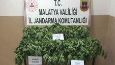 Malatya'da Uyuşturucu Madde Dedektörü Köpeklerle Yapılan Operasyonda Kenevir ve Esrar Maddesi Ele Geçirildi