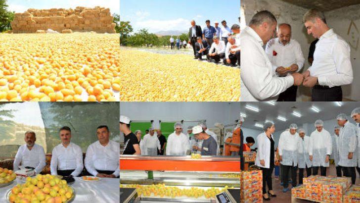 Malatya Valisi Aydın Baruş hasat yapılan bir bahçeyi ziyaret ederek çalışmaları inceledi.