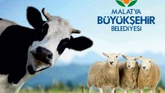 Malatya Büyükşehir Belediyesi, Kurban Bayramı öncesi büyükbaş ve küçükbaş sertifikalı kurban kesim kursu düzenledi.