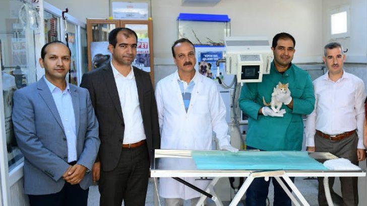 Yeşilyurt Belediyesi Hasta ve Yaralı Hayvanların Tedavilerini Profesyonel Cihazlarla Yapıyor
