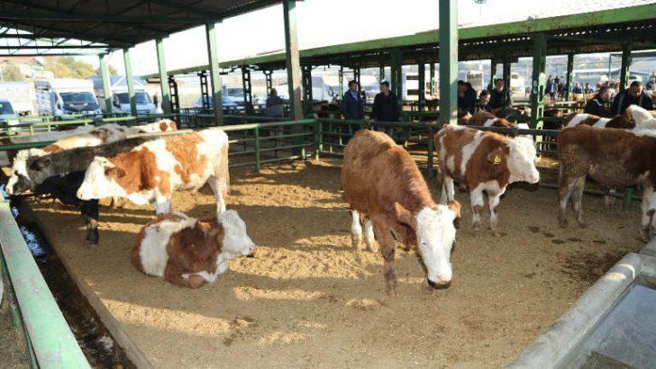 Başkan Güder : Hayvancılıkta Malatya'yı Bir Üs Haline Getirmek İstiyoruz