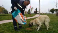 Sokağa çıkma kısıtlamalarında Yeşilyurt'ta ki sokak hayvanları unutulmadı