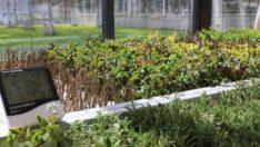 Battalgazi adeta çiçek bahçesine dönüşücek