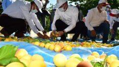 ValiAydınBaruş, Battalgazi İlçesi Yarımcahan Mahallesi'nde Malatya Kayısısının hasadına katıldı ve kayısı topladı.