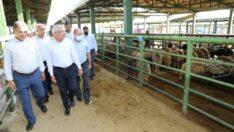 Battalgazi Belediye Başkanı Osman Güder, kurban bayramı öncesi kurbanlık satışı yapılan Canlı Hayvan Pazarını ziyaret ederek, alıcı ve satıcılarla uzun sohbet etti.